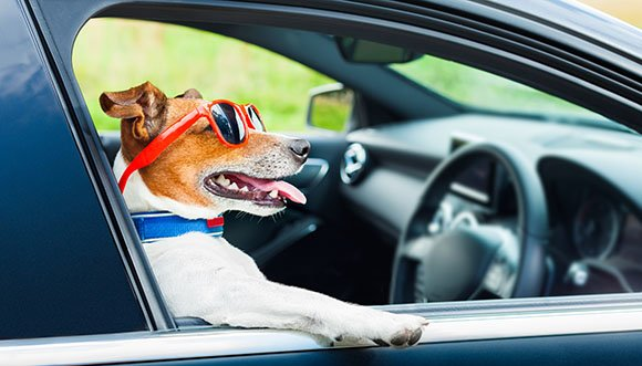 Follow our top tips for driving safely with a dog in the car