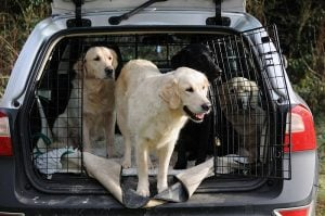 It is illegal to leave your pet in a car on a hot day