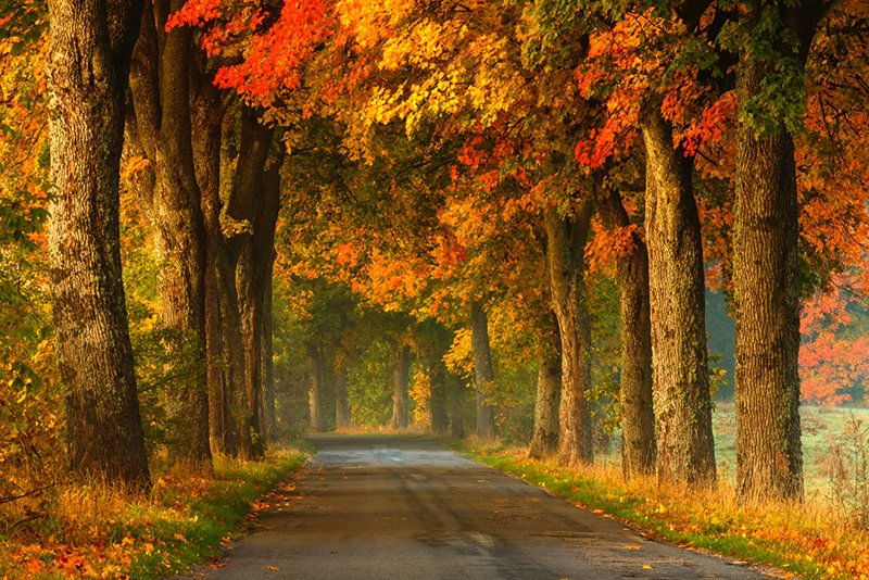 Stopping distances should increase as leaves on the roads make driving slippery