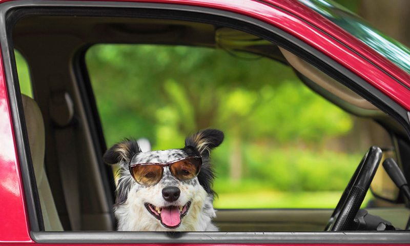 If you saw a dog locked in a car on a sunny day, what would you do?