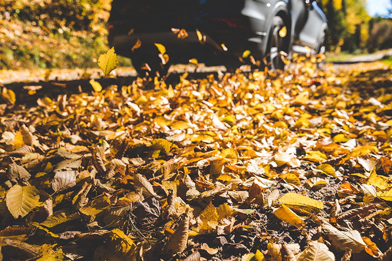Check out our top tips for driving this autumn.