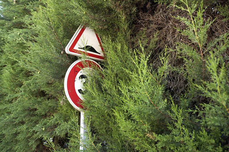 Obstructed road sign